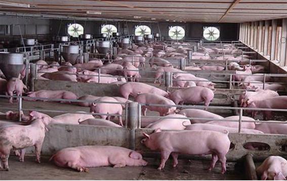 畜牧業生態環境自動監測控制系統