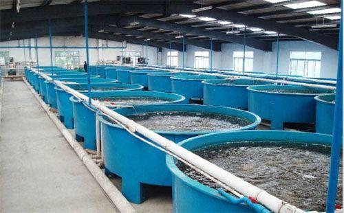 工廠化水產養殖循環水系統